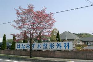 110427hanamizuki03