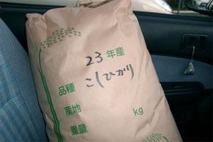 Koshihikari02_2